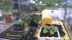 May Tour | Sean's Allotment Garden SUBSCRIBE - TWEET - COMMENT (including your location) Facebook: http://ift.tt/14GD6RS Twitter: http://www.twitter.com/hortchanneltv For monthly advice on what to do in the garden and on the allotment visit the monthly growing guides at http://ift.tt/1q9uslT
