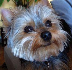 Irsute on www.yummypets.com Dog, pets, animals, puppy, pooch, woof, dog, doggie, Yummypets