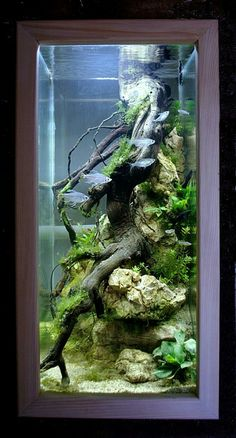 An aquarium is an enclosure with at least one clear side that houses water-dwelling fish, plants and other livestock and decorations. An aquarium offers a place for fish and plant life including corals and reefs to live in a contained… Continue Reading → Aquarium Nano, Aquarium Terrarium, Nature Aquarium, Aquarium Design, Aquarium Fish Tank, Biotope Aquarium, Aquariums Super, Amazing Aquariums, Tanked Aquariums