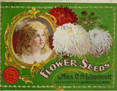 1894 - Flower seeds : - Biodiversity Heritage Library