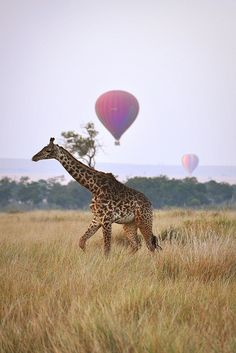 Fly a hot air balloon over Kenya. #giraffe
