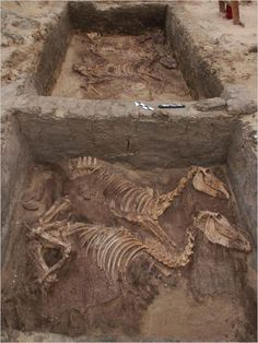At a funerary complex in Abydos, archaeologists have uncovered the skeletons of 10 donkeys buried with full honors. The bones date from 3000 B.C.