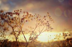 Photo Sunset by S.V Photo on 500px