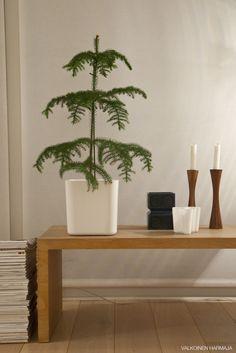 Huonekuusi Minimalist Christmas, Dark Winter, Midnight Sun, Own Home, Flowers, Gardens, Ideas, Furniture, Eggs