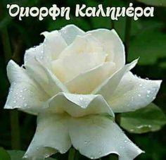 Good Night, Good Morning, Beautiful Pink Roses, Mom And Dad, Image, Facebook, Photos, Fotografia, Nighty Night