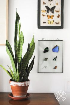 Unexpected wall decor in an editor's masculine and sophisticated NYC home. #etsy #homepolish