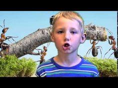 Mravenci - YouTube