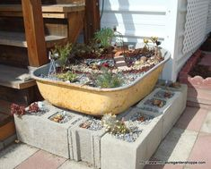 For the person who loves sedum, hens & chicks and other succulents, this is an interesting display!
