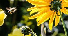 Οι μέλισσες ανακηρύχτηκαν ως τα πιο σημαντικά έμβια όντα στον πλανήτη - Εναλλακτική Δράση