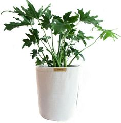 Garden pots and planters new. We rethink potted plants with their lightweight, breathable pots made from a durable resistant fabric. No more broken pots Outdoor Pots, Plastic Pots, Garden Planters, Plants, Room Ideas, Pretty, Collection, Contemporary, Plastic Planters