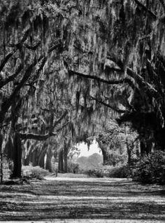 Bonaventure Cemetery, right outside of Savannah's National Landmark Historic District.