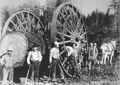 Big wheeks:  Big wheels drawn by teams of horses were used in the early logging years to move logs from the woods. This method worked only on relatively level terrain, therefore the big wheels were not really suited to the steep terrain found in the Sierra and the big wheels gave way to more efficient ways to move logs to the sawmills. via shaverlake.org
