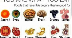 Image result for foods that resemble organs
