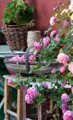 Roses, potting table