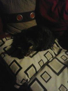 Francis Cat Calendar | Indiegogo