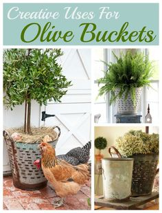 Using olive buckets in your home decor.  Farmhouse, french, industrial, eclectic or shabby, whatever your decorating style they make a beautiful statement.