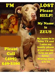 Lost Dog - Pit Bull - Tolar, TX, United States 76476 Click on pic for additional information about this lost furry baby♥♥♥