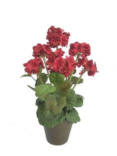 Spring Inspirations 17'' Geranium in Pot Red at Joann.com