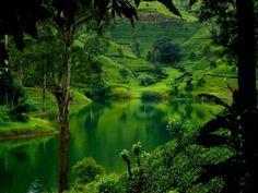 Sri Lanka lowland rain forests, Sri Lanka
