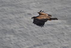 Eagel Runde bird and treasure island # Norway