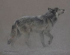 Robert Bateman Catching The Scent Wolf, We have this print and second signing by Mr. Bateman on the glass.