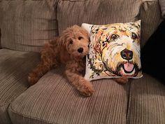 Goldendoodle Labradoodle Pillow Cases Multiple Colors