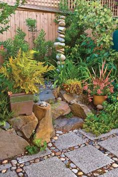 37 Best Vetplant Idees Vir My Tuin Images Dream Garden