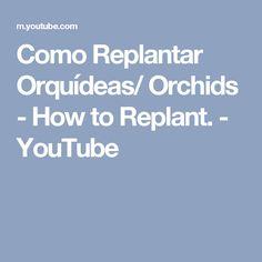 Como Replantar Orquídeas/ Orchids - How to Replant. - YouTube