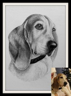 Dog Art, Horse Art & Other Pet Portraits Sketched By Hand in Graphite Pencil Done Working From Your Photos by Pet Artist Genevieve Schlueter. Portrait Sketches, Drawing Sketches, Dog Sketches, Dog Drawings, Tumeric For Dogs, Bassett Hound, Drawing Projects, Pet Fashion, Hand Sketch