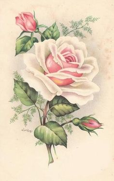 Vintage Images: Vintage roses postcards ~ Peace rose, the kind growing by my grandmother's front door :) Floral Vintage, Vintage Diy, Vintage Paper, Vintage Flowers, Vintage Prints, Shabby Chic Flowers, Decoupage Vintage, Vintage Ephemera, Vintage Cards