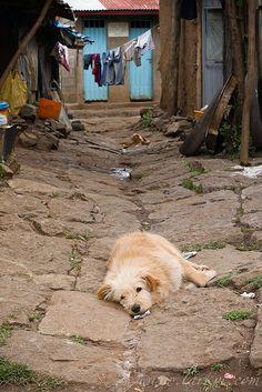 watchdog, addis ababa, ethiopia, november 2008.