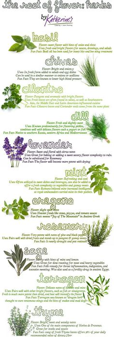 The Root of Flavor: Herbs #herbalremedies