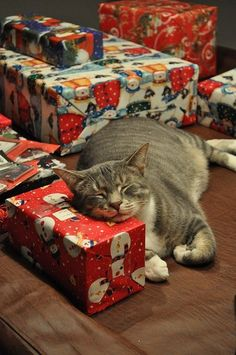 Wrapped presents make great pillows!