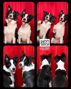 Avantson projetTails from the Booth, la photographe américaine Lynn Terry a eu l'idée de mettre en scène les chiens abandonnés d'un refuge dansun phot