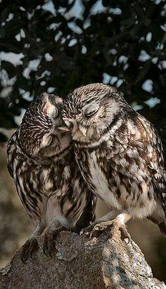 Si esto no es amor el amor donde está?