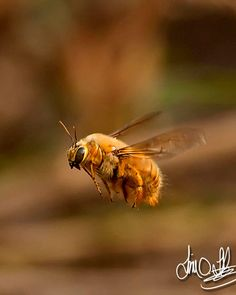 Bees. We NEED them!! :)