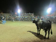 Ever been a rodeo clown in Costa Rica? I have! This is my story:  #travel #costarica https://donilviaggiatore.wordpress.com/2015/10/03/ole-toro-ole-rodeo-showdown-in-costa-rica/…