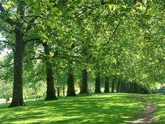 Google Image Result for http://www.planetware.com/i/photo/st-jamess-park-london-gb269.jpg
