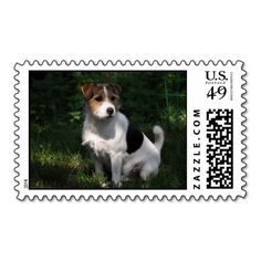 Parson Jack Russell Terrier Stamps