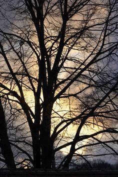 Tree in the barn on a November evening November, Barn, Celestial, Sunset, Abstract, Artwork, Outdoor, November Born, Summary