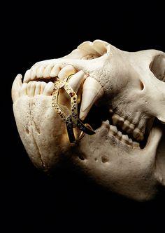 Editorial   Jewellery & Watches   Mitch Feinberg   #jewellery #editorial #bones