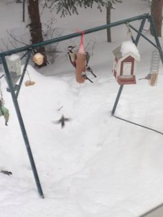 rare birds in my bird feeder