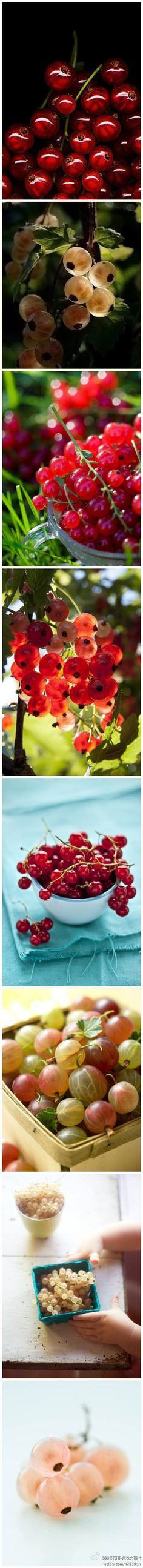Currants are so beautiful. How can I resist growing them? Exotic Fruit, Exotic Plants, Rare Plants, Fruit Garden, Edible Garden, Cancer Fighting Fruits, Types Of Berries, Growing Grapes, Wild Edibles