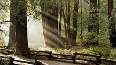 Sunlit Forest – Nature Wallpaper | rontalk