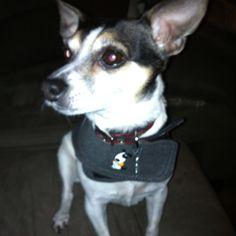 Lulu in her Thundershirt :)