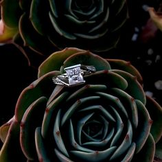 A bold contemporary twist on a vintage bypass ring this diamond engagement ring is a dazzler. The prong-channel set princess cut diamond is squarely captured by the split cathedral shank, while pave set diamond adorn the ridges.