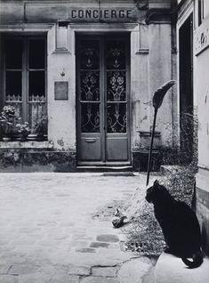 Le chat devant la loge de la rue Tournon Janine Niepce