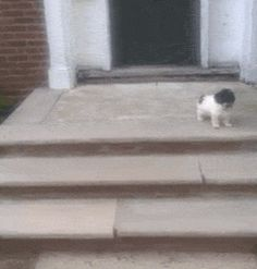 New funny GIF on Giphy #funny #funnygif #funnygifs