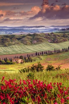 Tuscany in spring. - I love the range of different colors.