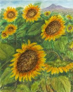 sunflowers - watercolor and pastel by Jana Haasová